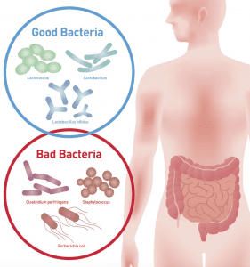 Gut Flora Image showing good and bad bacteria