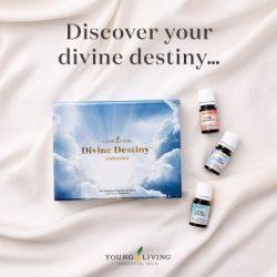 Divine Destiny Collection # 38479